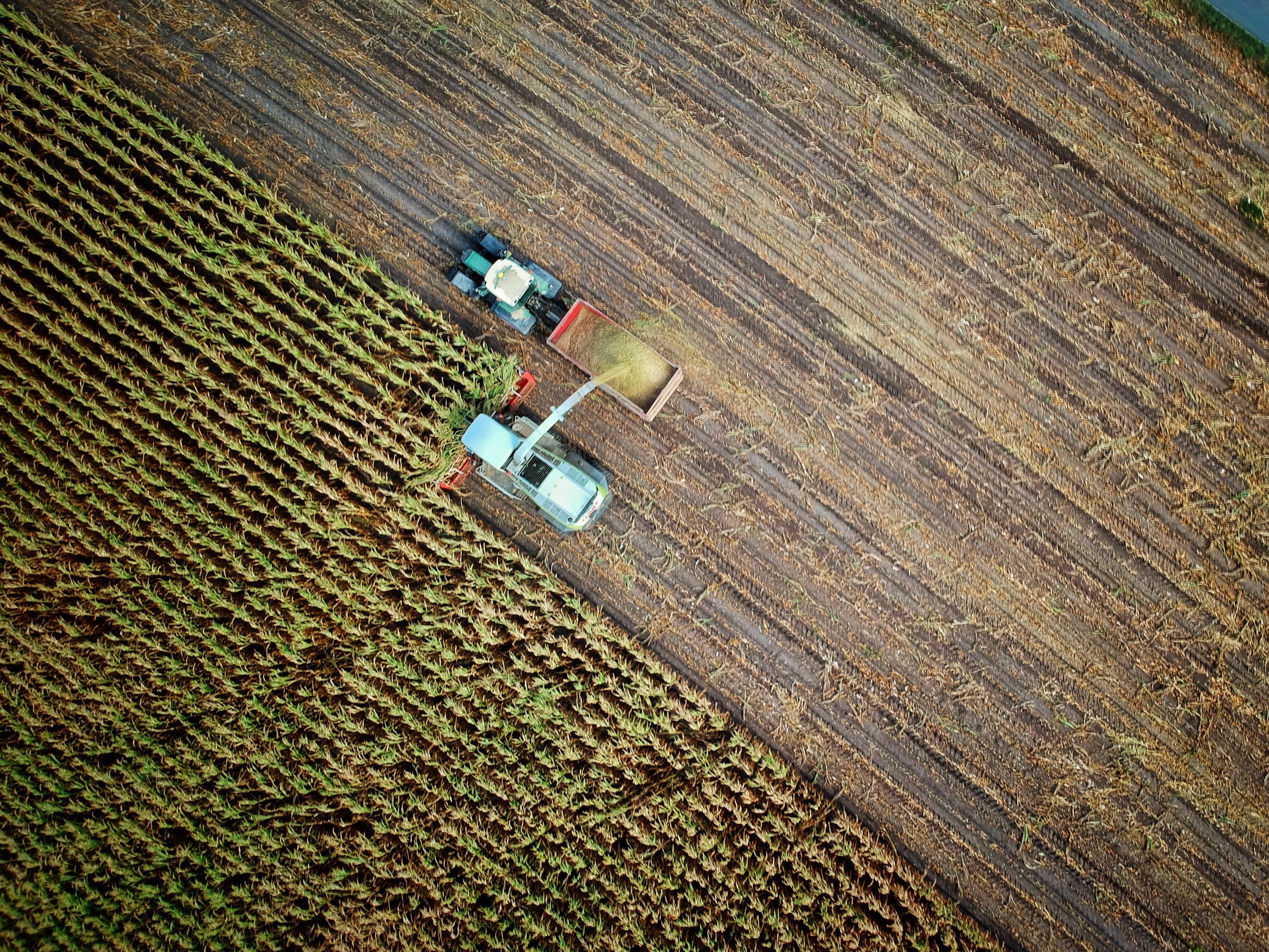 Selezione per ammissione al laboratorio sulla produzione agricola biologica